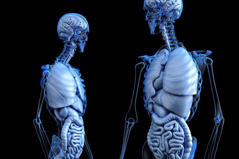 Slika prikazuje človeško telo pod nekakšnih pogledom kjer se vidijo črevesja, želodec, brez kosti. Članek je za Gastritis